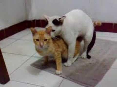 Kucing Kawin Sama Kelinci Lucu Banget