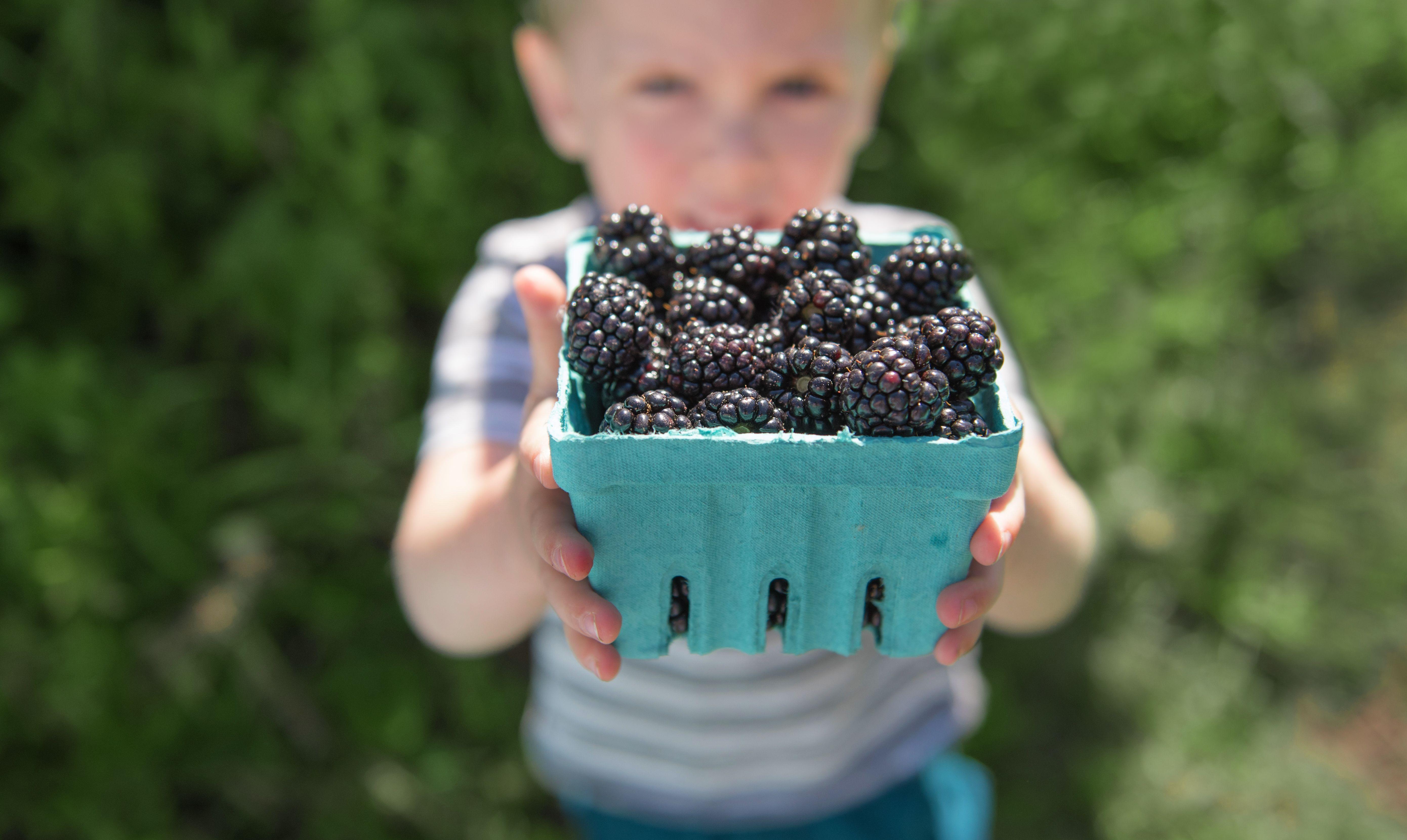 Beautiful fresh picked Oregon Blackberries! Berries, How