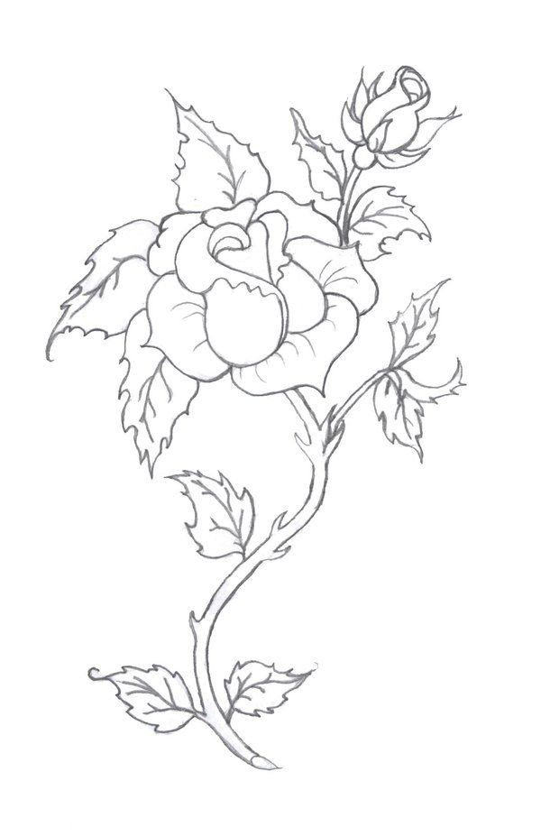 Rose Tattoo Pencil By Tobilou On Deviantart Roses Drawing Coloring Pages Flower Coloring Pages