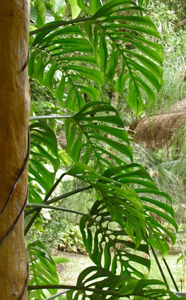 Mature climbing plants