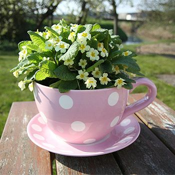 Strawberry Fool Sell These Gorgeous Giant Teacup Planters On Their