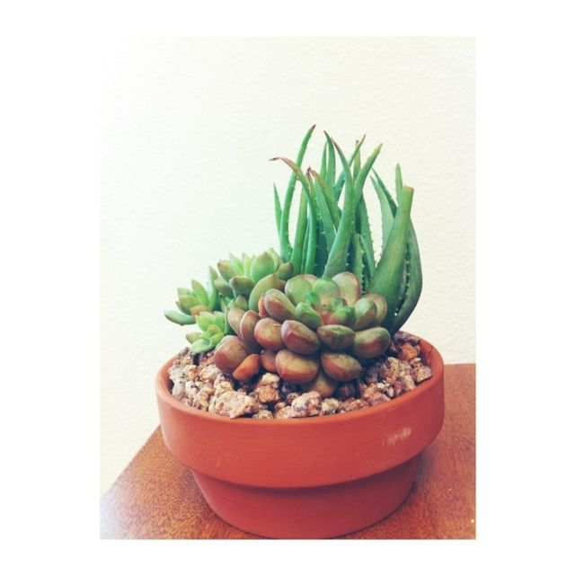 i got a new plant for work :)