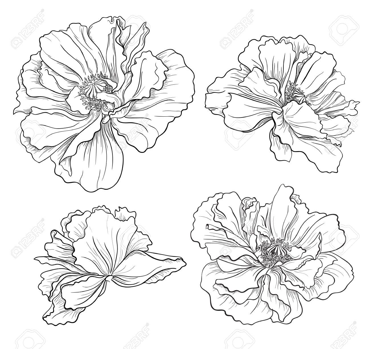Flower Hand Drawn Poppies Royalty Free Cliparts, Vectors, And Stock ...