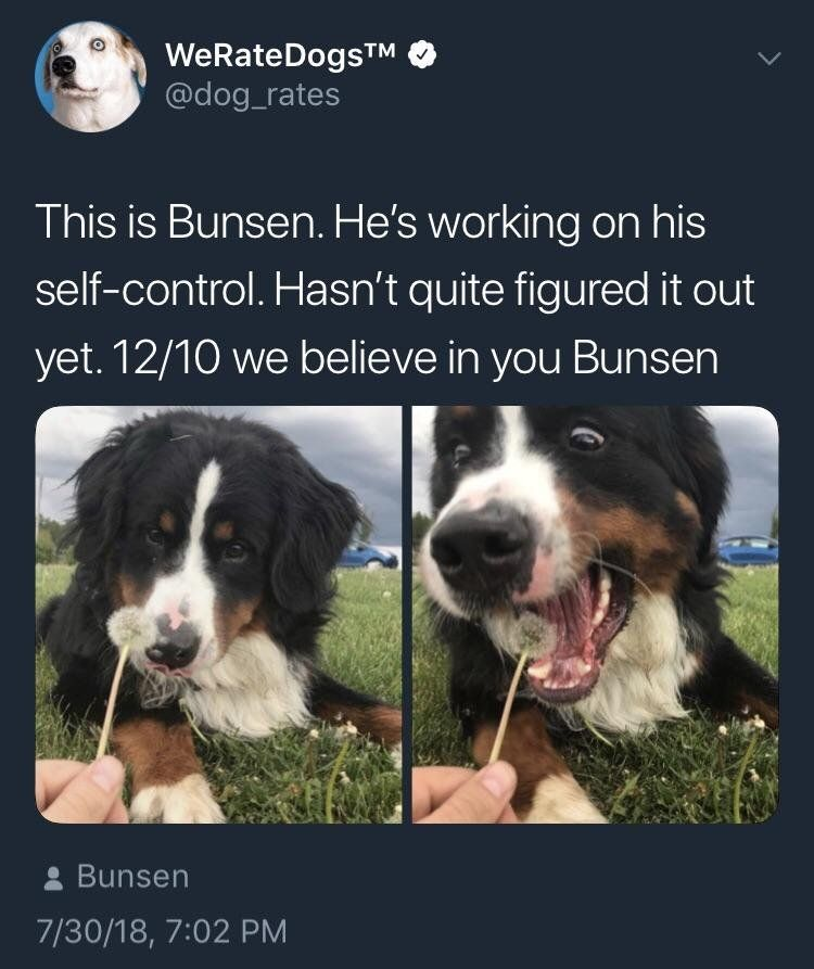 Bunsen is all of us