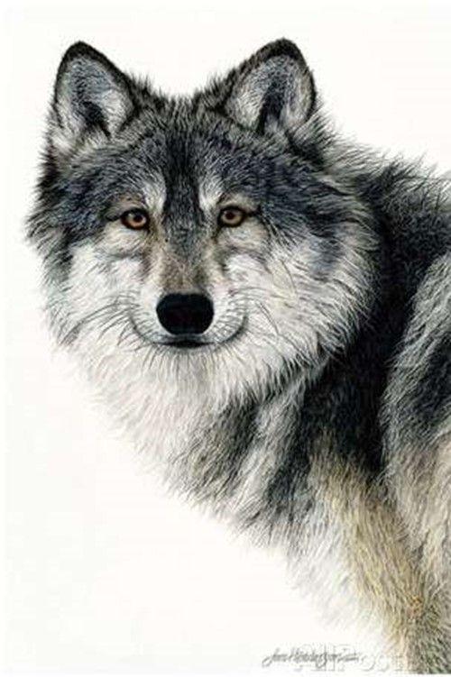 Silent Watch by Jan Henderson | WOLF | Pinterest | Lobos, Lobo ...