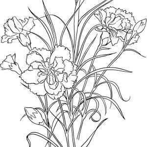 Carnation Flower and Cardinal Bird Coloring Page Coloring Sun