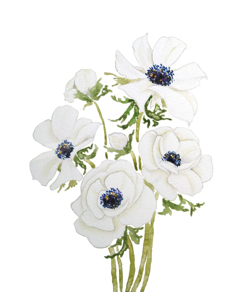 White Anemone Flower Watercolor Painting Art Print By Color And Color X Small In 2020 Watercolor Flowers Paintings Paintings Art Prints White Anemone Flower
