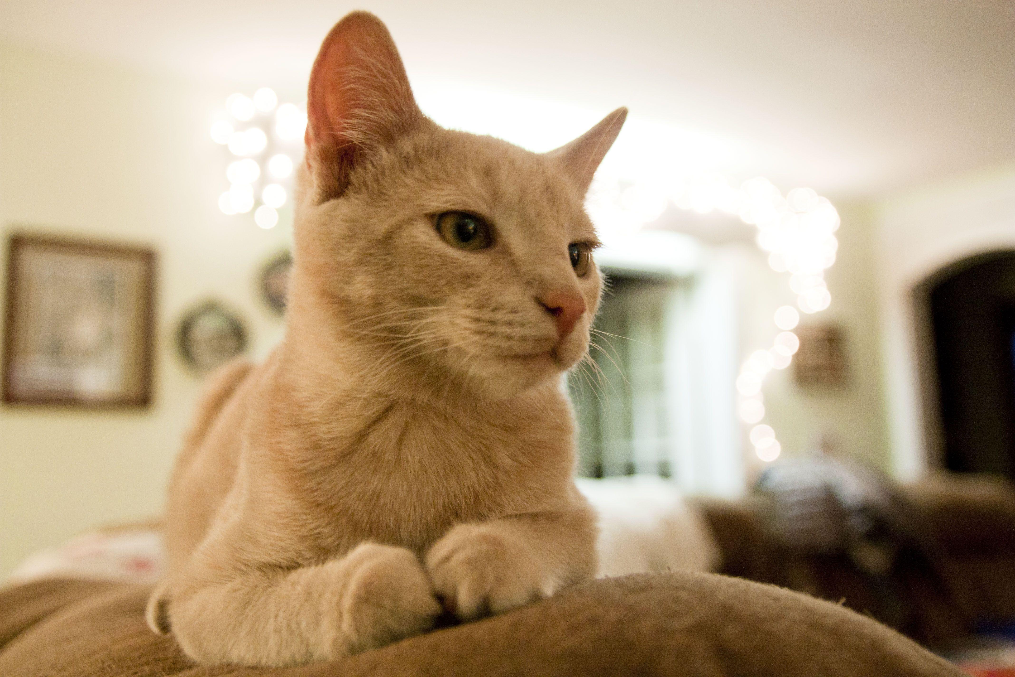 One Writer S Way Tabby Cat Kitten Rescue Tabby