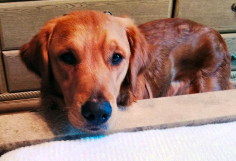 Adopt avery on dog boarding near me dog odor eliminator
