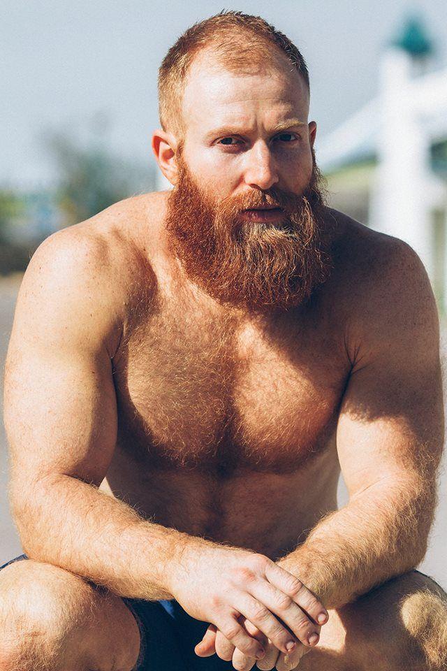 sexy hairy bear