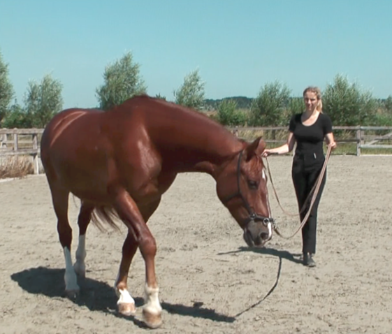 LFS on a bigger circle in walk Horse lessons, Horses