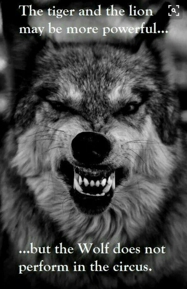 Citaten Over Dieren : Pin van ahmad sokhta op tattoo pinterest wolven
