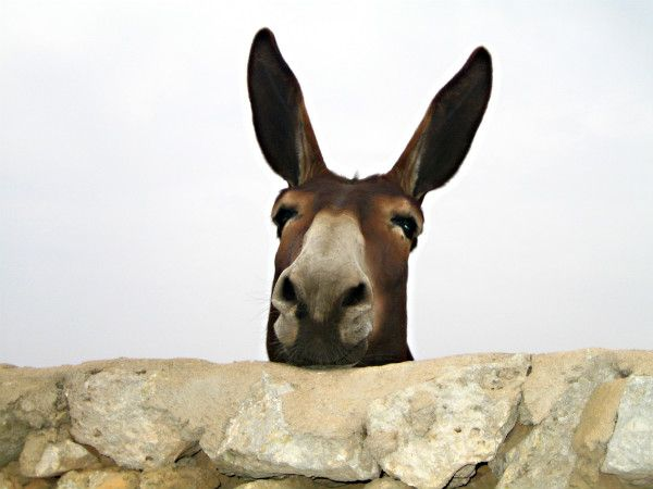 The story of Balaam\'s talking donkey is always a favorite with ...