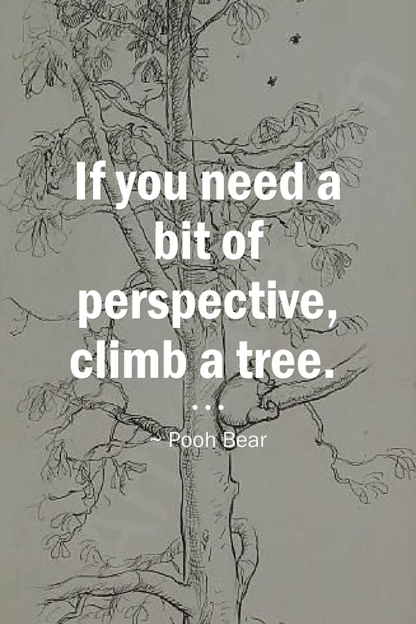 If You Need A Bit Of Perspective Climb A Tree Perspective Quotes Climbing Quotes Funny Instagram Captions