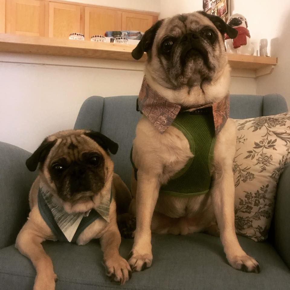 Baxter And Atticus Here From Austin Texas We Haven T Gotten To
