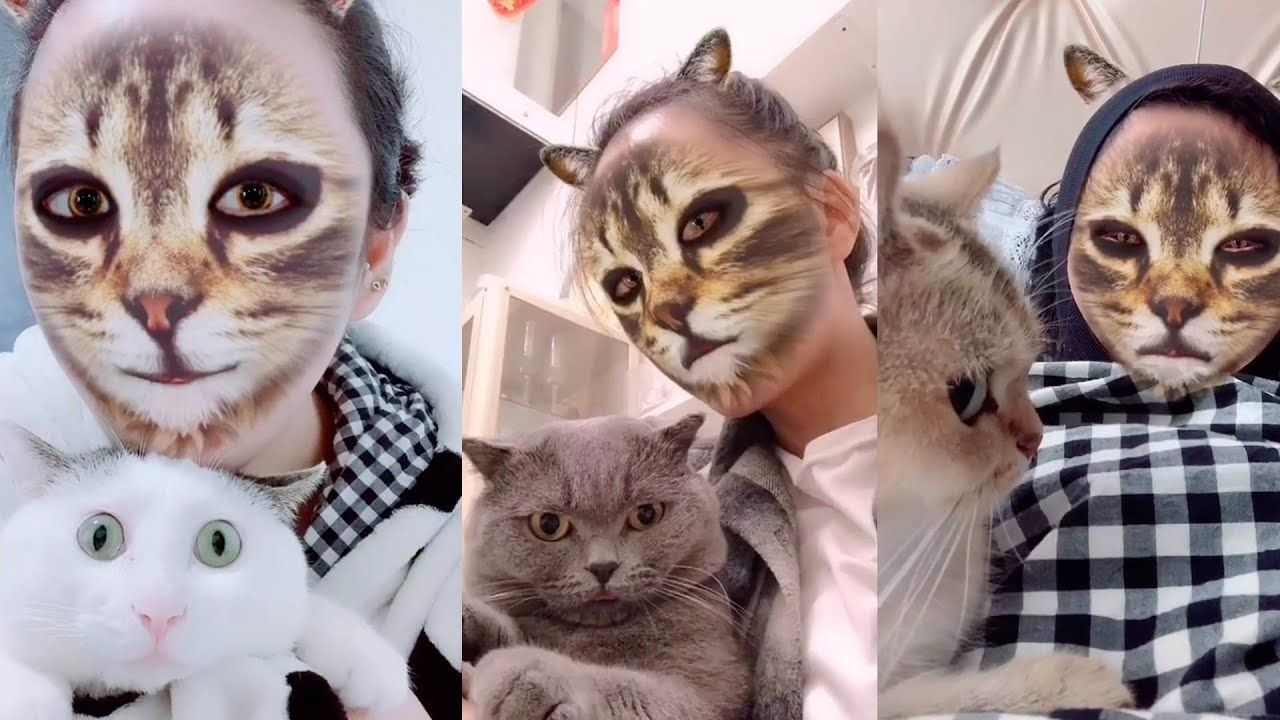 Cats Hilarious Reaction To A Cat Filter Aww Cute Animals Cats Dogs Funny Cat Videos Cat App Funny Cat Pictures