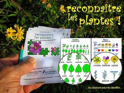 Comment Reconnaitre Les Plantes Plante Plantes Sauvages Plantes Comestibles