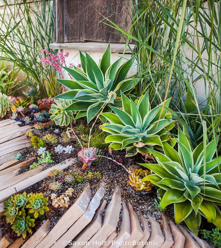 Succulent display garden at Succulent Gardens, Watsonville on ...