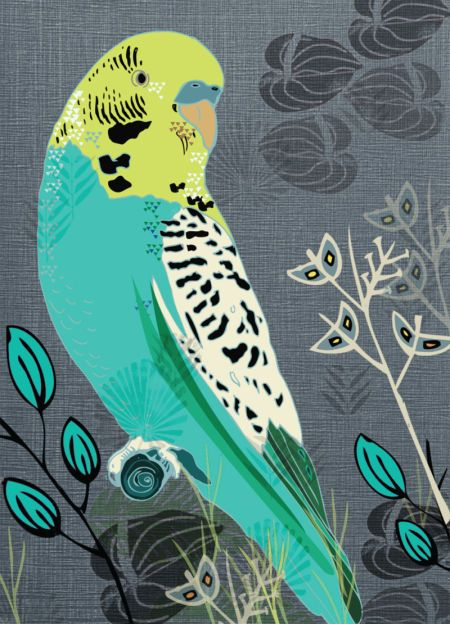Jill White Tourquiose Budgie With Images Parakeet