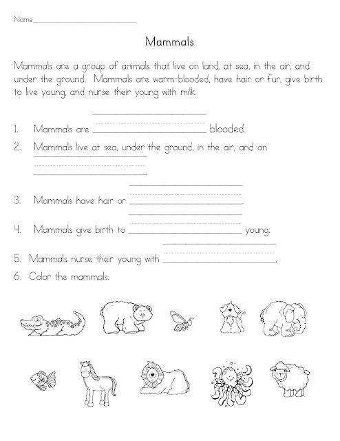 Worksheets For Grade 1 In Science : Mammals more worksheets ideas