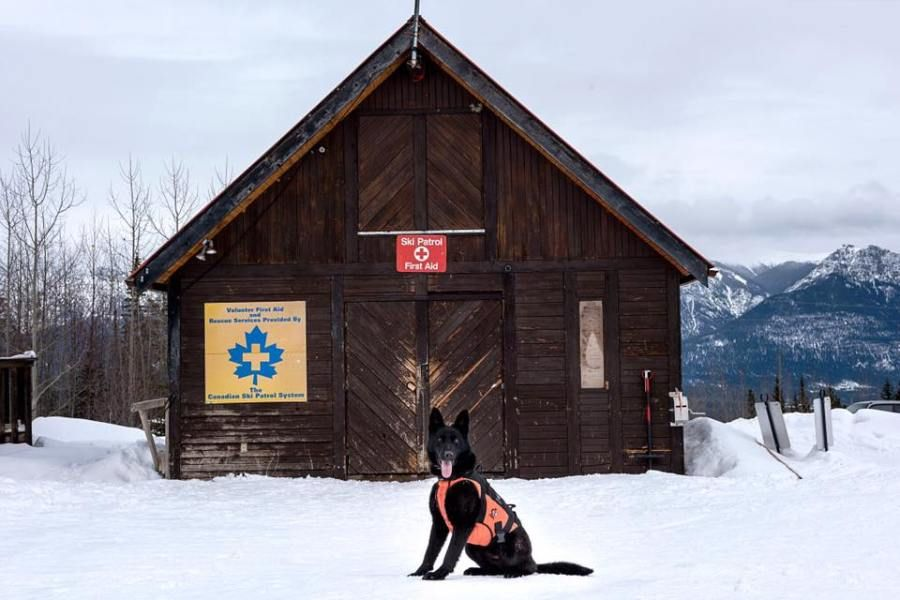 Avalanche Rescue Dog Makes World's First Helicopter Line