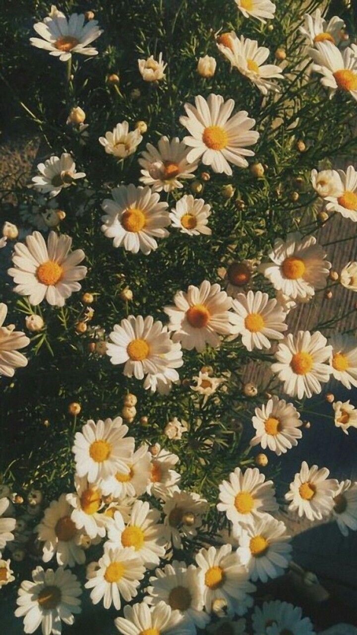 Pin By امل عبدالله On Nature Flower Wallpaper Flower Aesthetic Nature Wallpaper