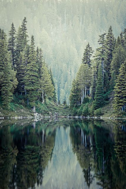 Green Trees by photosbysomeguy, via Flickr