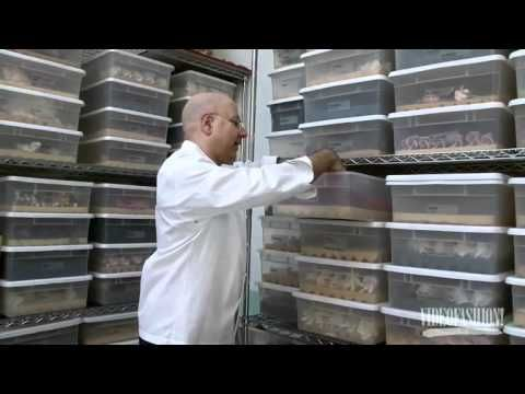 Ron Ben-Israel Cakes - Bridal SS11 - Videofashion. Love this video.
