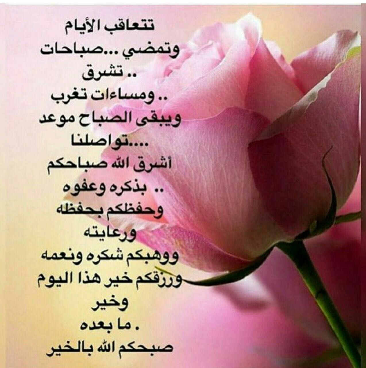 Pin By Nihad Allam On Greetings Wishes Morning Greeting
