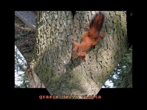 due_scoiattolini_in giardino - YouTube-www.angelapercaso una meraviglia!!!