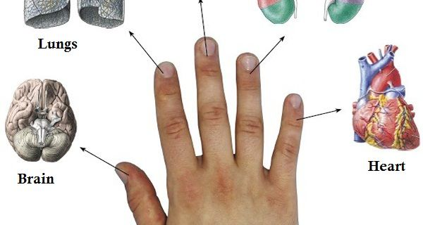 The Japanese have curing treatment which requires 5 minutes and it is based on the fingers. In fact, every finger is connected with two organs.