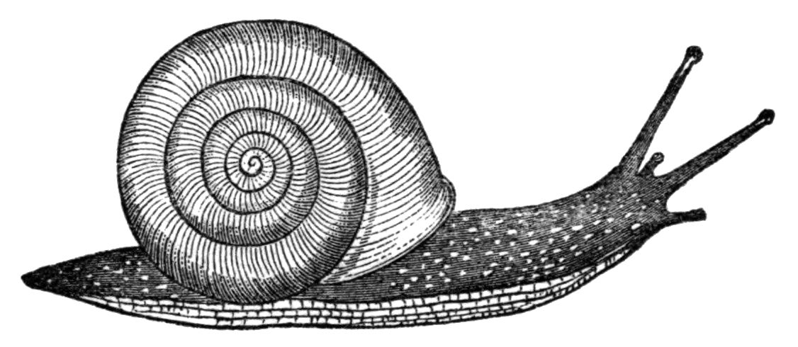 Good snail drawing for numbers game Snails Pinterest