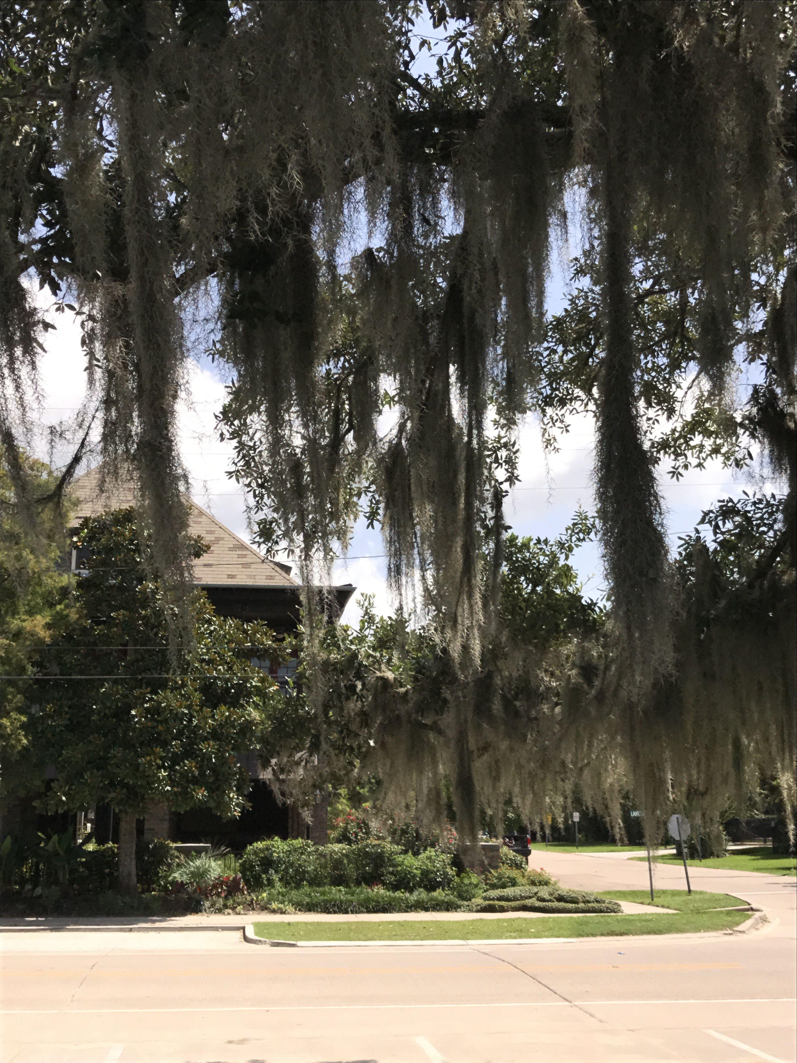 Pin on I Love Louisiana ⚜️⚜️⚜️