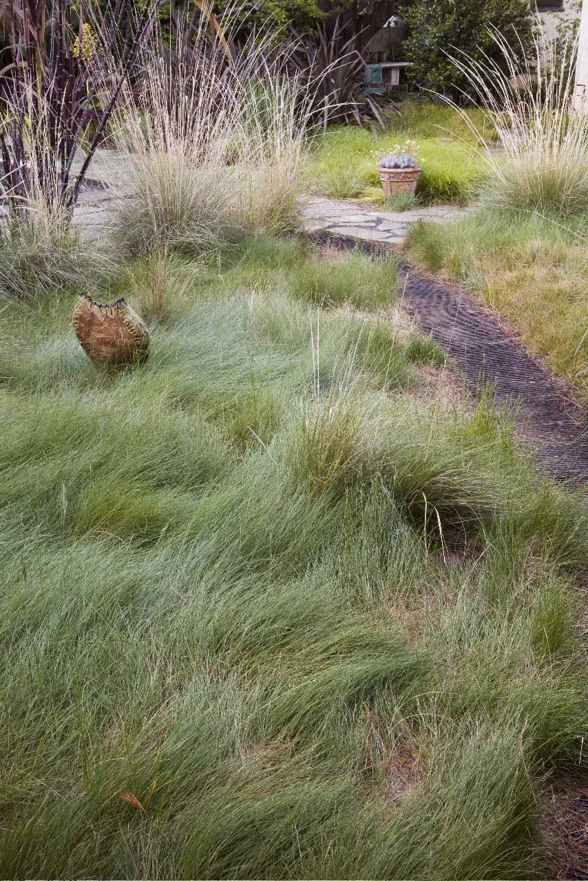 Wild garden native grass a seascape of grass an for Red landscaping grass