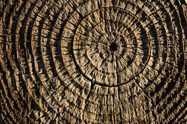 Texture Definition In Art : Texture is used to mimic the appearance of a quot surface