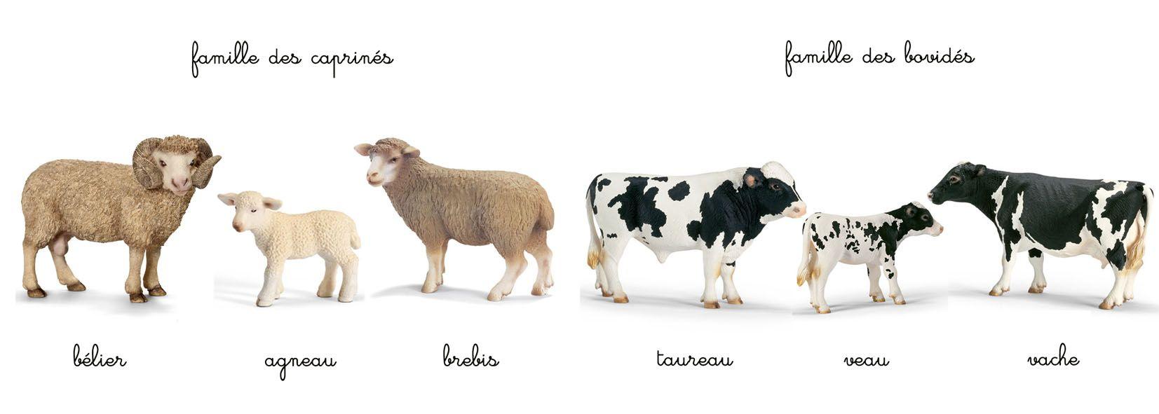 Top 76} # Les familles d'animaux - Ah l'heure Montessorienne | IEF  XK29