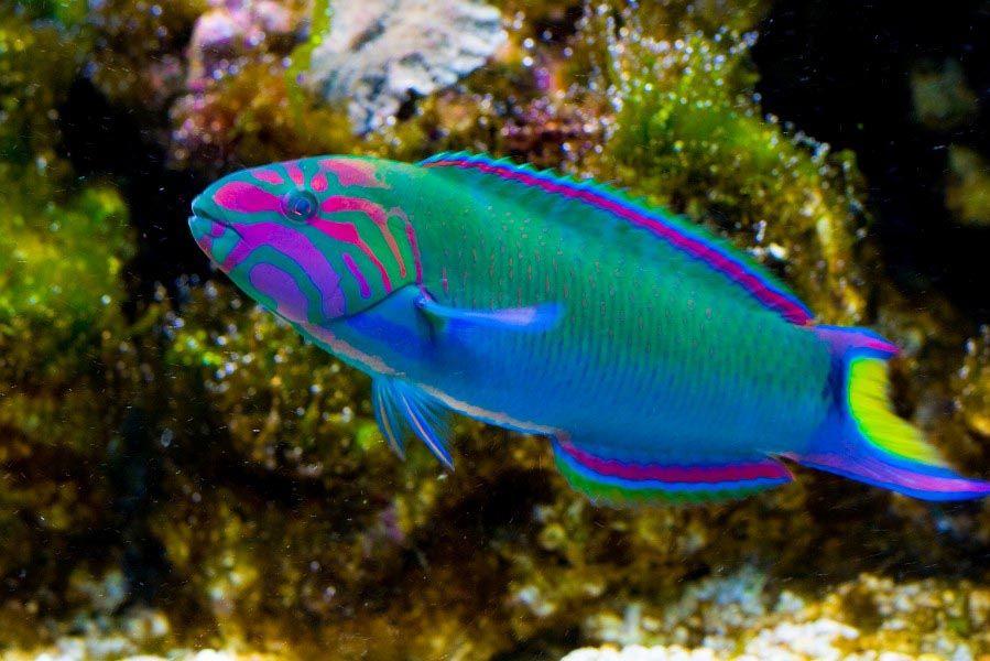 Saltwater fish list for aquariums aquarium design ideas for Tropical fish list