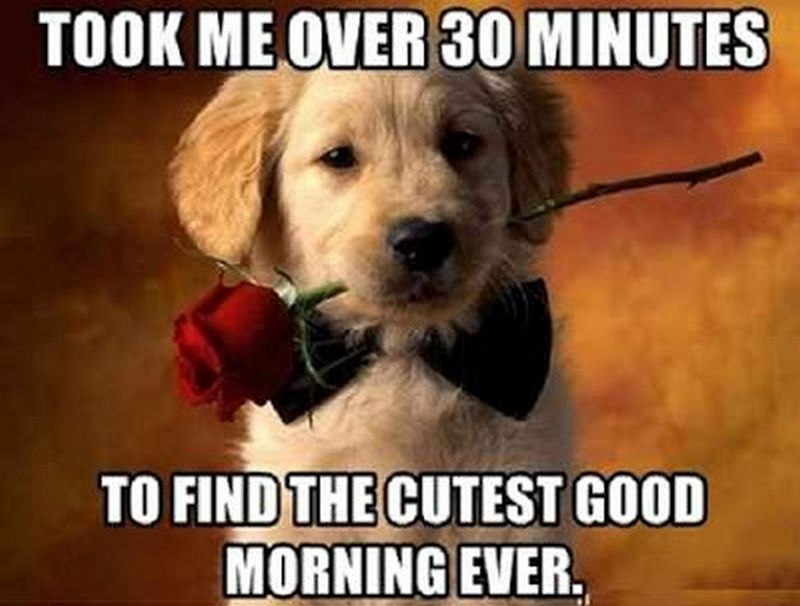 101 Good Morning Memes For Wishing A Beautiful Day For Him Her Good Morning Meme Morning Memes Good Morning Funny