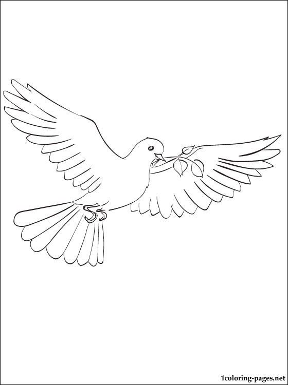 Free Dove Line Drawing Coloring Pages Dove Drawing Bird