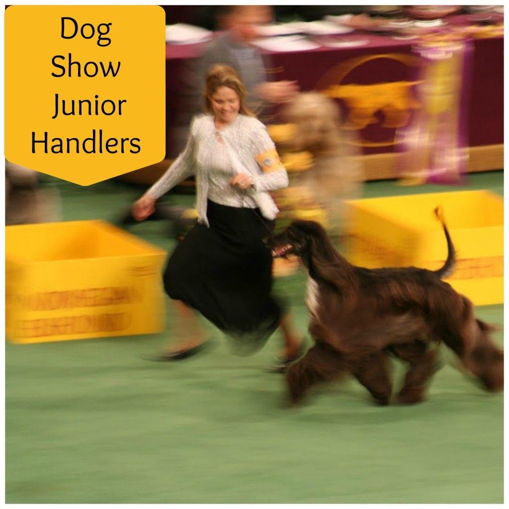 Becoming A Dog Show Junior Handler Teaches Children Teens