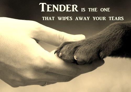 Cute Dog Quotes Tumblr