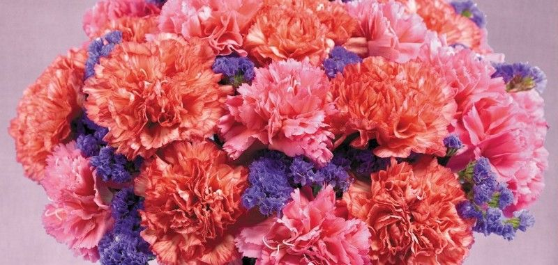 History And Meaning Of Carnations Proflowers Blog Carnations Pink Carnations Mothers Day Flowers