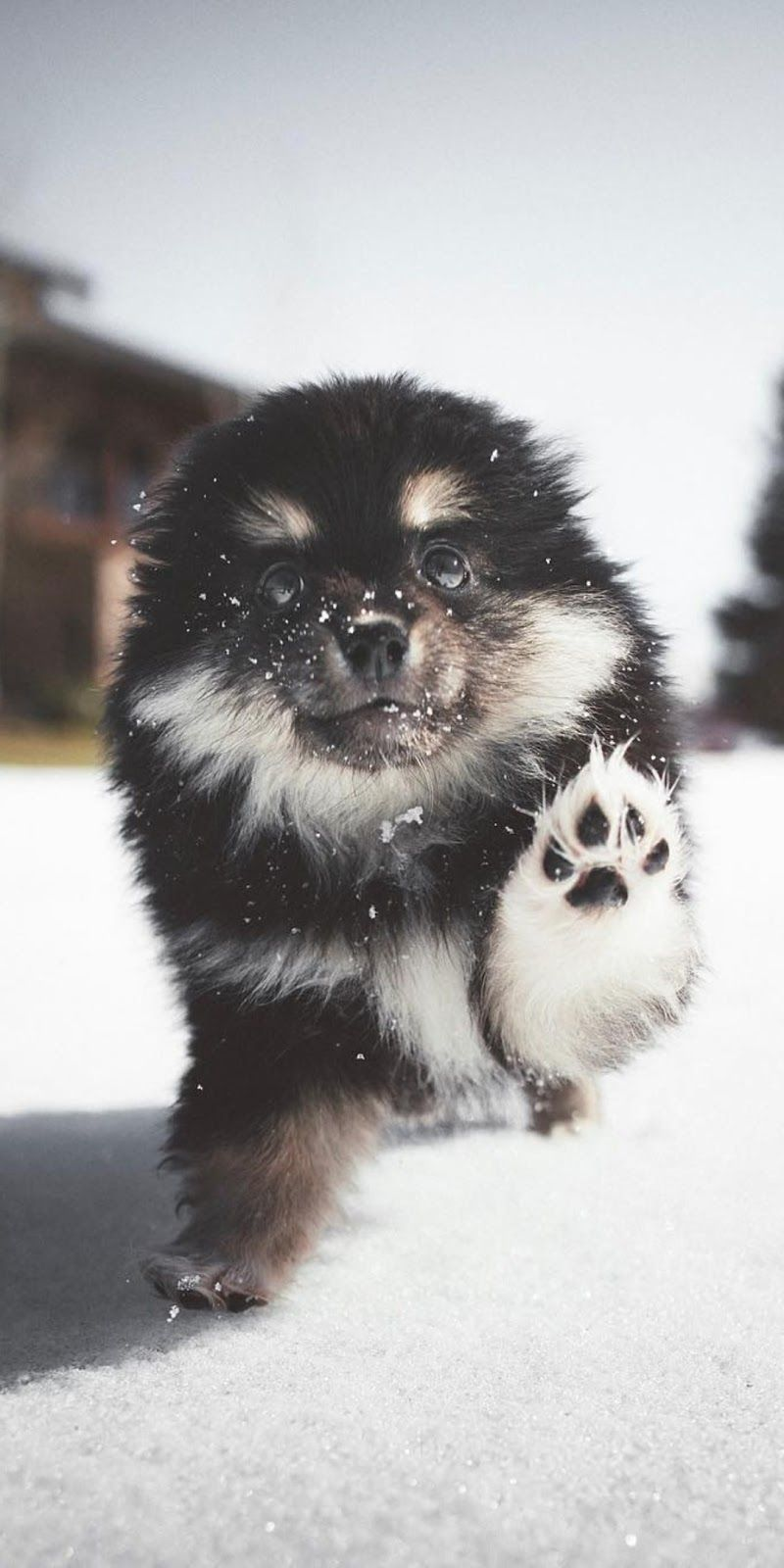 Playing In The Snow Cute Dog Wallpaper Cute Baby Animals Cute