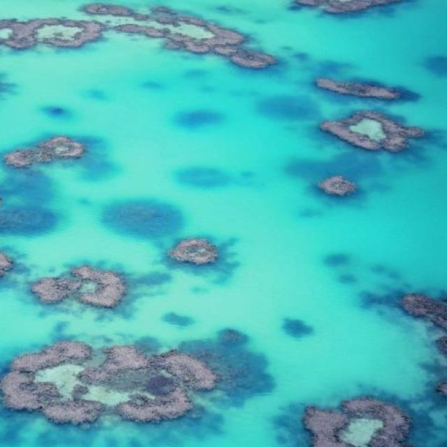 Wistari Reef, The Great Barrier Reef