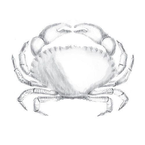 SPELLBINDERS: 3D Shading Crab