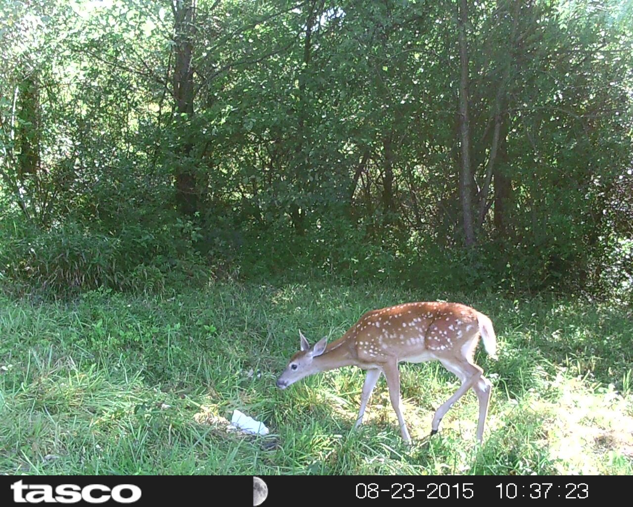 deer-lick-salt-block