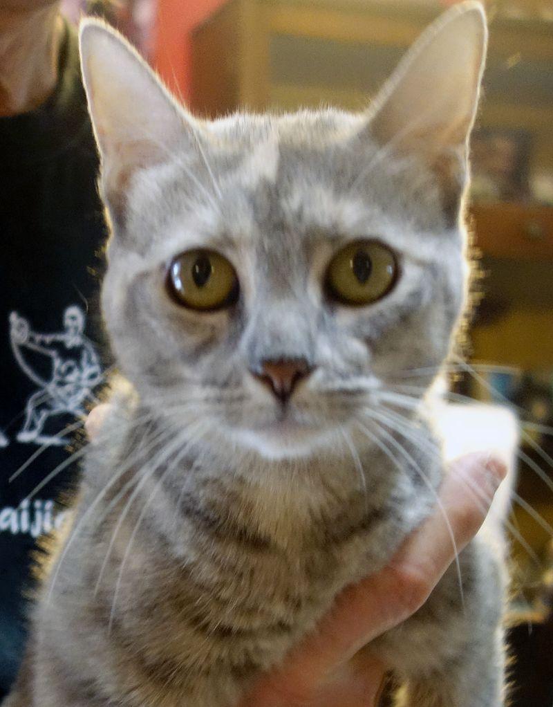 Adopt Heather On Animals Pet Adoption Adoption