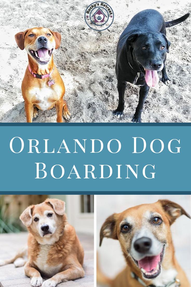Dog Boarding Near Me Dog boarding near me, Dog boarding