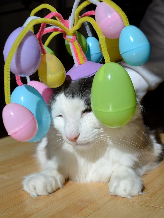 Image result for cat with easter egg hat