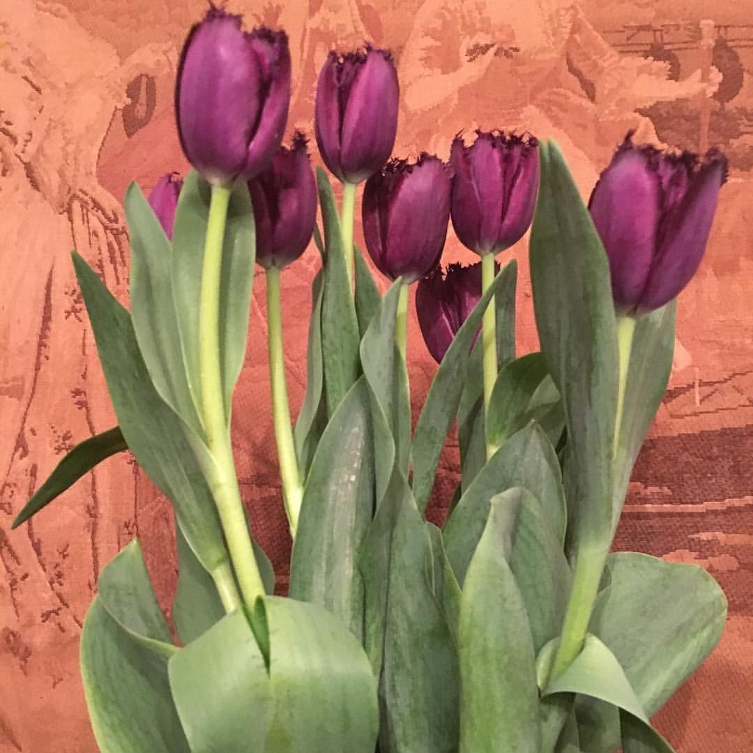 Tulipanes rizados del fontán.